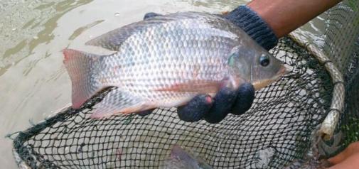 Cara Mendapatkan Uang Dengan Tehnik Budidaya Macam Ikan Kekinian